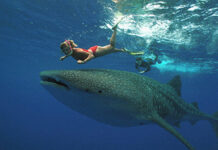 Whale Shark Tour Cancun