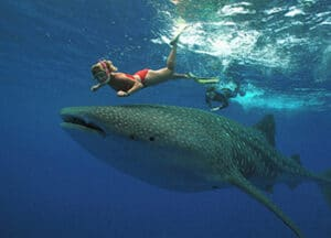 Whale Shark Tour Cancun