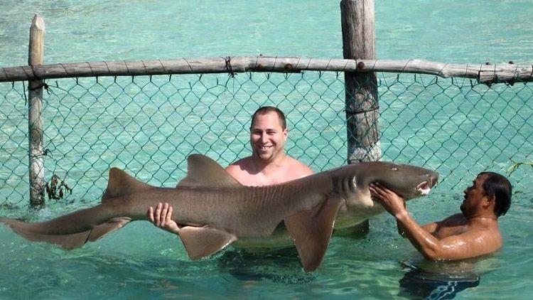 Nurse Shark Isla Mujeres